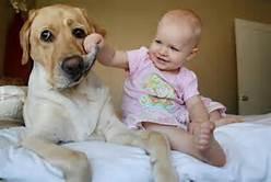 De perros y niños